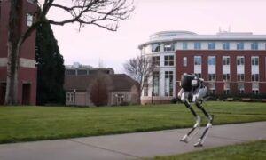 Cassie – Next Generation Yürüyen robotu ilk adımlarını atıyor